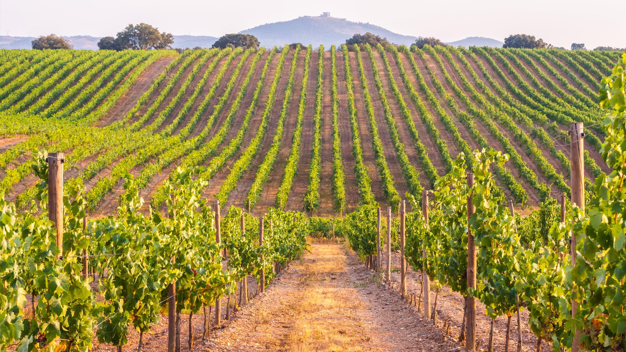 Wine Tourism and Rural Development