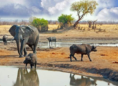 WILDLFIE CONSERVATION & SUSTAINABLE TOURISM IN ZIMBABWE