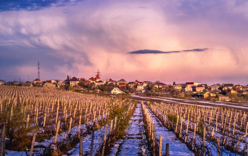 3rd UNWTO Global Conference on Wine Tourism