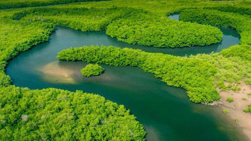 Nomad Lab Amazon Forest