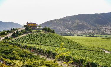 World's Biggest Conference on Wine Tourism Celebrates