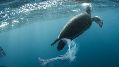 L'Initiative mondiale sur le plastique et le tourisme s'attaque à l'un des pires polluants de la planète
