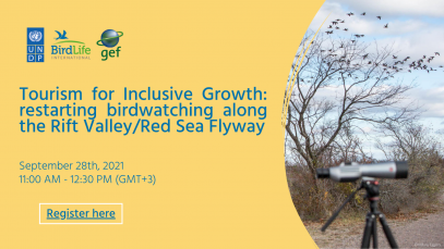 Tourism for inclusive growth: restarting birdwatching along the Rift Valley/Red Sea Flyway