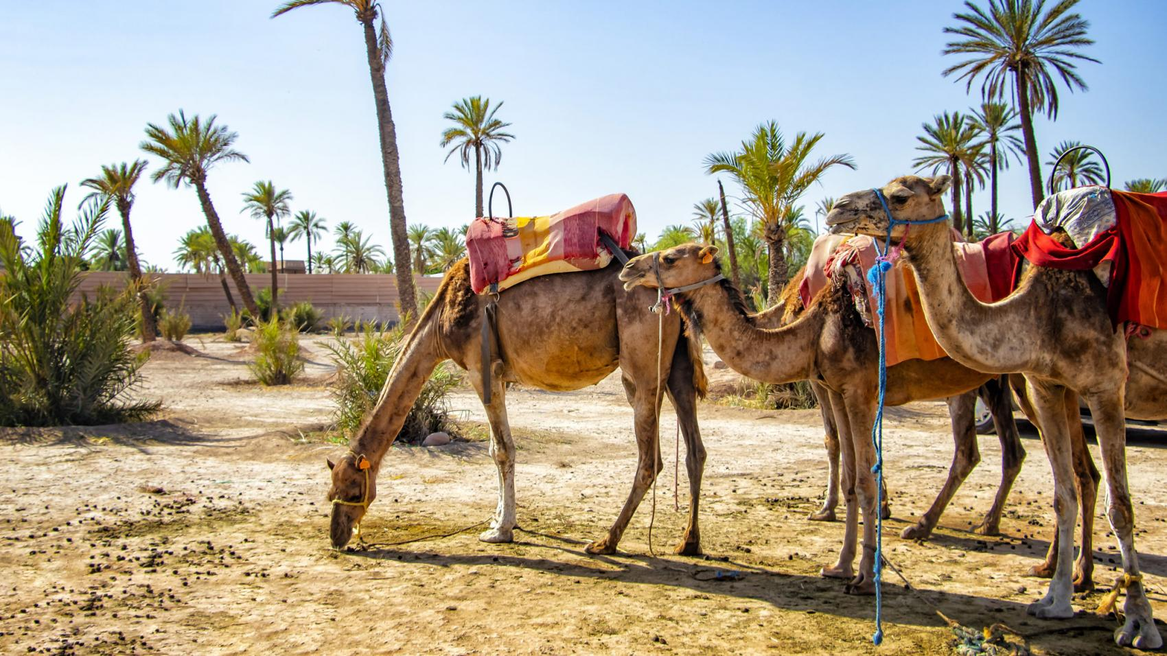 UNWTO and Google Partner to Guide Restart of African Tourism